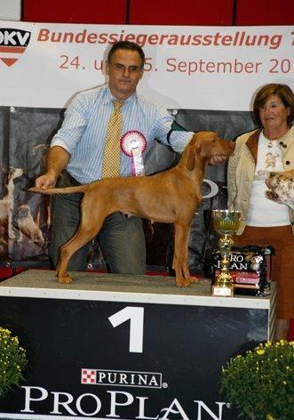 Luxatori zeline chien de race toutes races en tous departements france inscrit sur chiens de france - Braque hongrois a poil court ...
