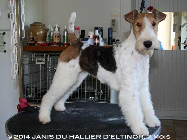 Janis du Hallier d'Eltinor