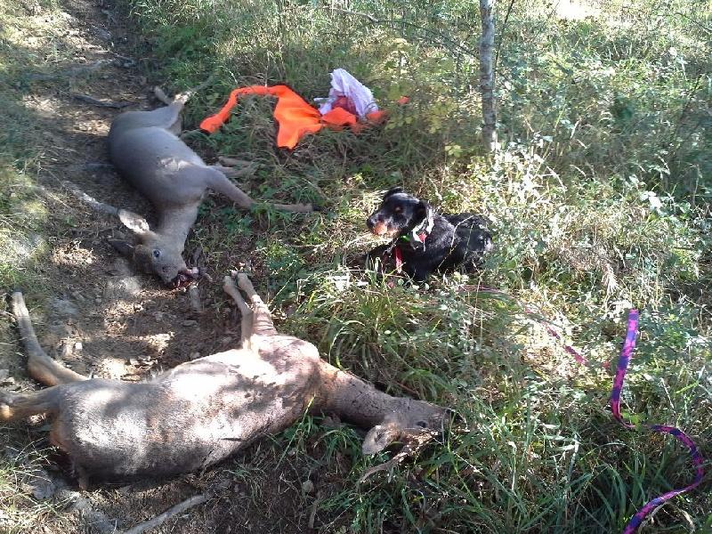 Chien - Elevage De L'aubaigue - eleveur de chiens Terrier