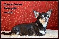 sweed indeed Midnight secret