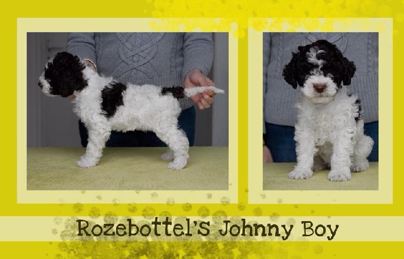 CH. rozebottlel's Johnny boy