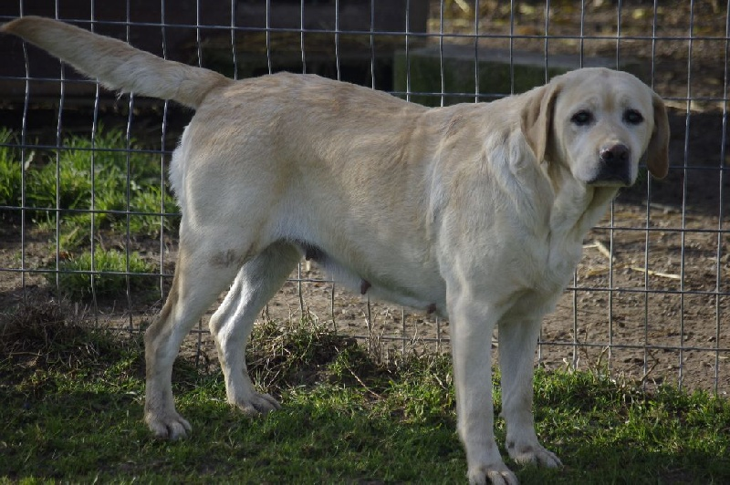 Daisy du domaine des Malivier