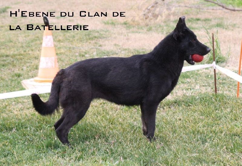 Berger allemand - H'ebene du Clan de la Batellerie