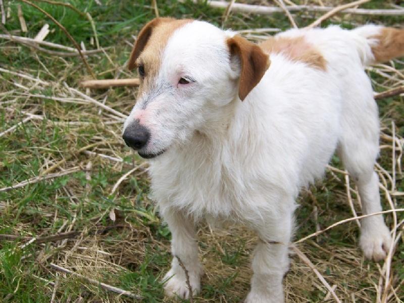 Les Jack Russell Terrier de l'affixe Philippe Garnier