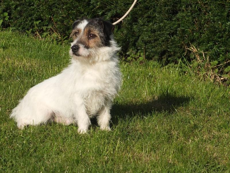 Les Jack Russell Terrier de l'affixe Du Domaine De Mafleurio