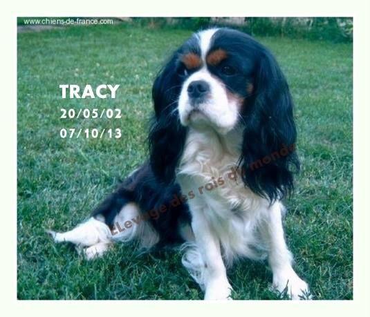 Tracy De la vallee du parc Buirette