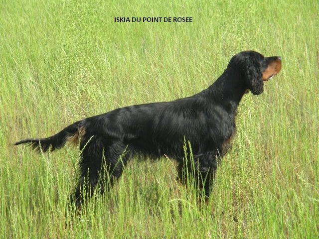 Chien elevage du point de ros e eleveur de chiens for Point de rosee chaudiere bois