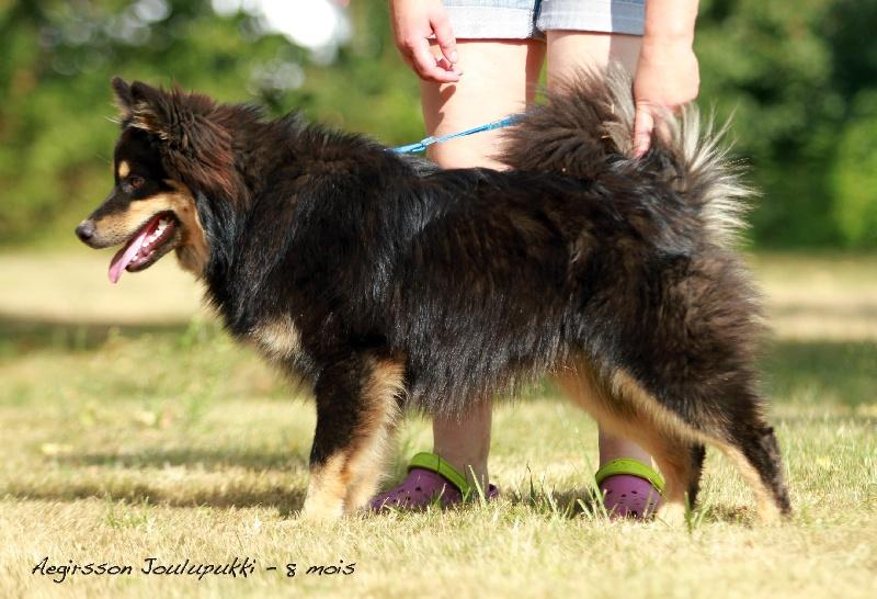 aegirsson joulupukki chien de race toutes races en tous departements france inscrit sur chiens. Black Bedroom Furniture Sets. Home Design Ideas