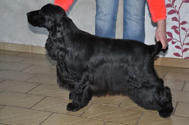 Eleveur de chiens dans le 86 DU CHARME EN DOG