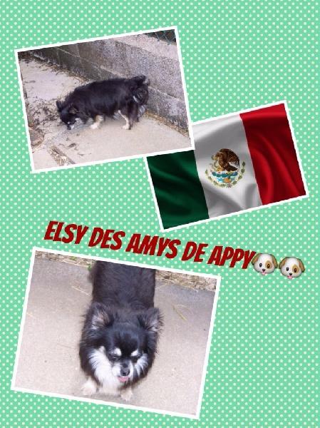 Les Chihuahua de l'affixe Des Petits Dieux Du Conchos