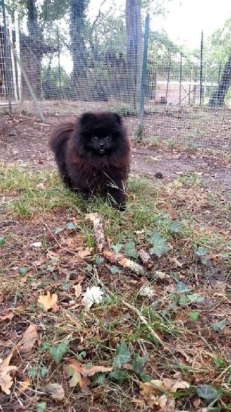 Mookie's boy des Oursons de petit-palais