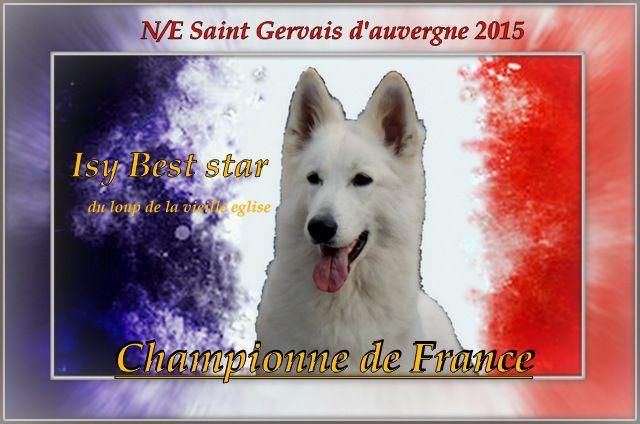 CH. Isy best star du Loup de la Vieille Eglise