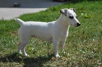 Holly Des Terriers Du Large