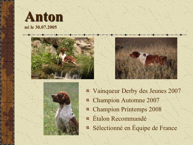Les Epagneul Breton de l'affixe des plaines de septimanie