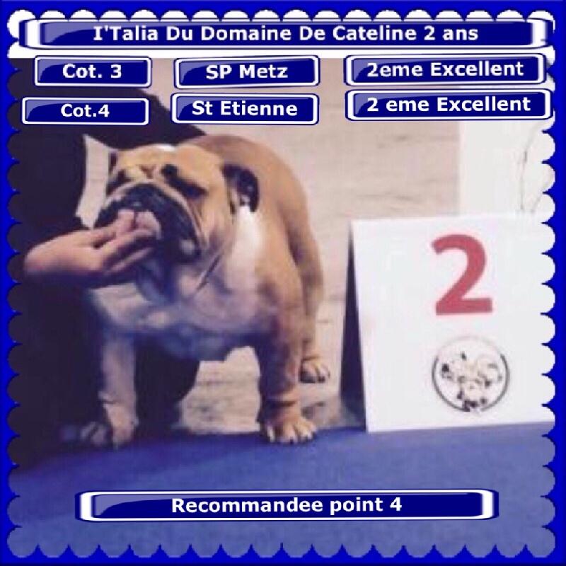 Bulldog Anglais - I.talia du domaine de Cateline