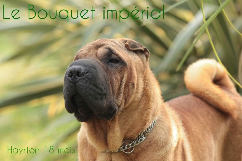 Publication : Du Bouquet Imperial  Auteur : valerie L