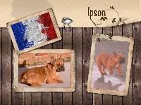 Ipson (Sans Affixe)