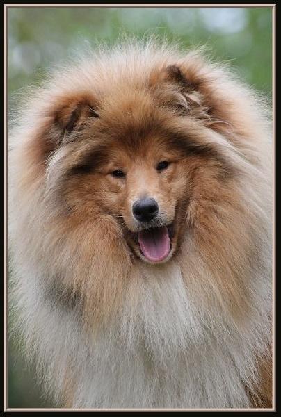 isatis blonde de la pierre d 39 elisa chien de race toutes races en tous departements france. Black Bedroom Furniture Sets. Home Design Ideas