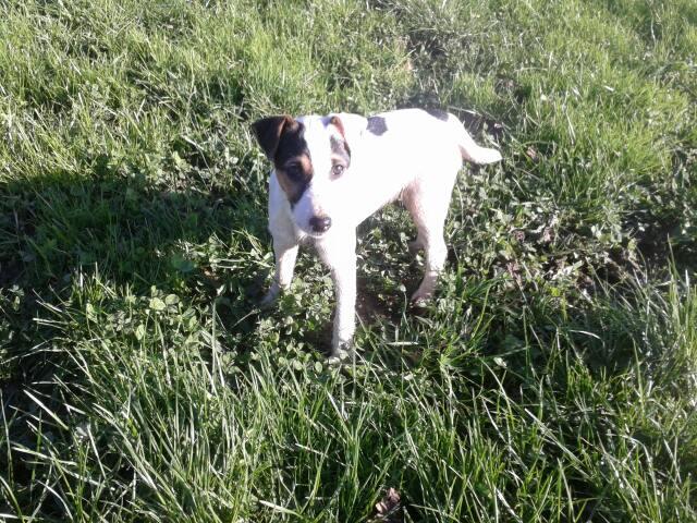 Les Parson Russell Terrier de l'affixe Live with hope