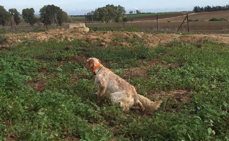 Chien - Elevage Des Belles Du Causse - eleveur de chiens
