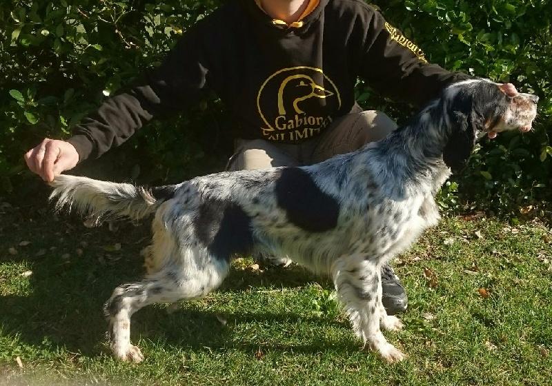 Java Des Bords De La Trézence chien de race toutes races