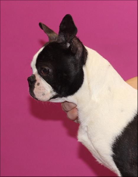Publication : Of darling dog  Auteur : NATHALIE BELLE