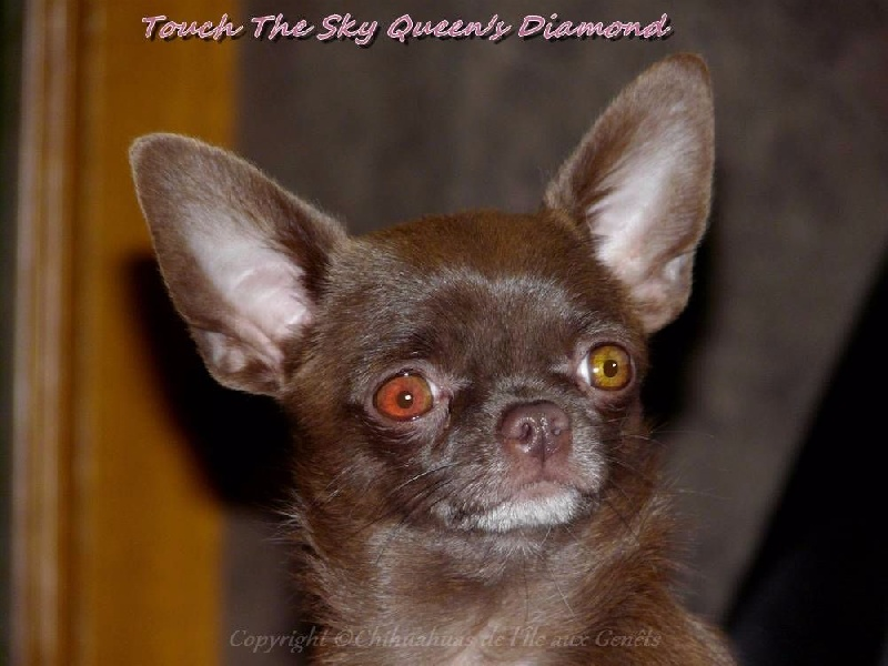 Touch the sky queen's diamond