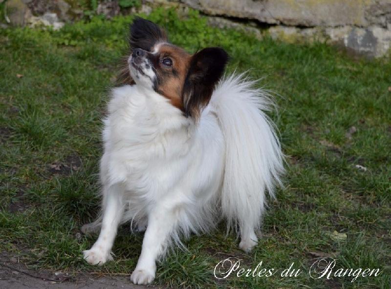 Joy's Des Perles Du Rangen
