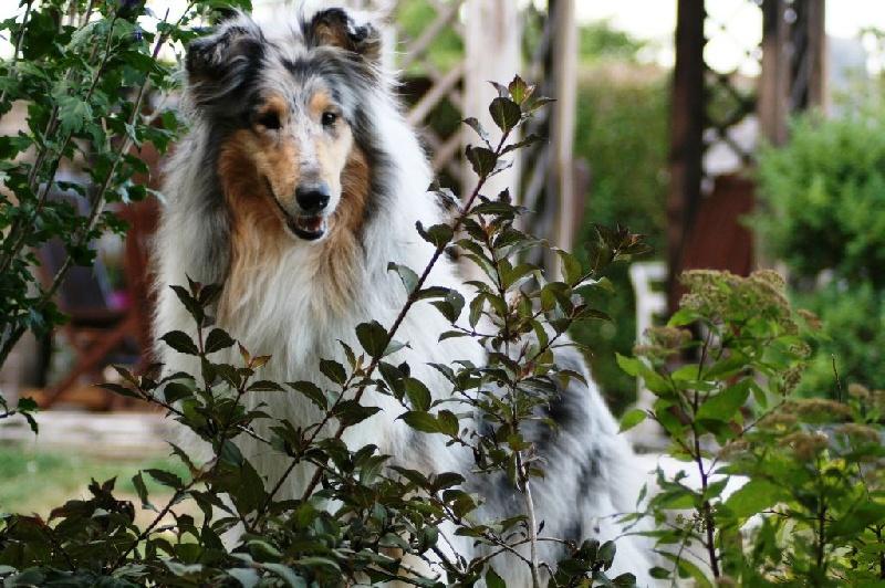 manuka zen de creve coeur chien de race toutes races en tous departements france inscrit sur. Black Bedroom Furniture Sets. Home Design Ideas