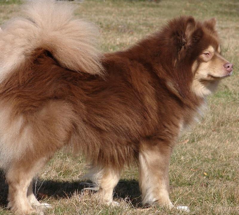 ch aegirsson djoikku chien de race toutes races en tous departements france inscrit sur chiens. Black Bedroom Furniture Sets. Home Design Ideas
