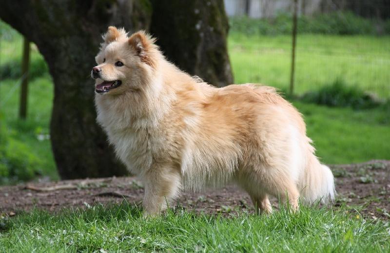 okhmhaka du jardin de laponie chien de race toutes races en tous departements france inscrit sur. Black Bedroom Furniture Sets. Home Design Ideas