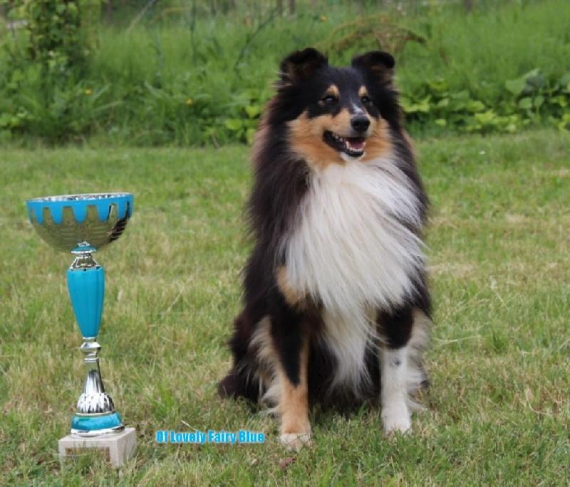 Isoke Des Bergers Du Landas chien de race toutes races en