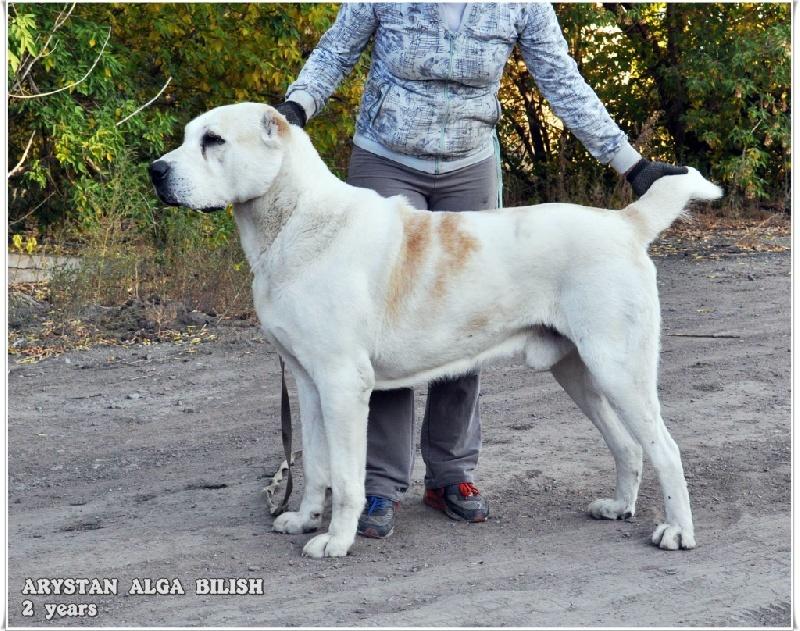 Berger D Asie Centrale