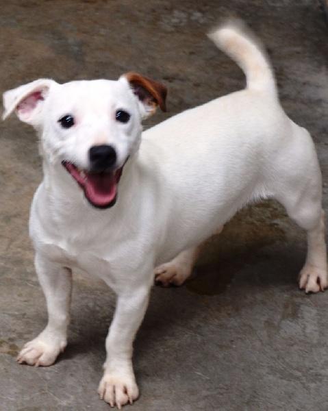 Les Jack Russell Terrier de l'affixe Des Sources De La Liane