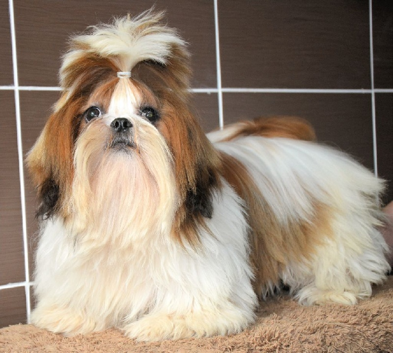 Little buddha De Crioleeene chien de race toutes races en