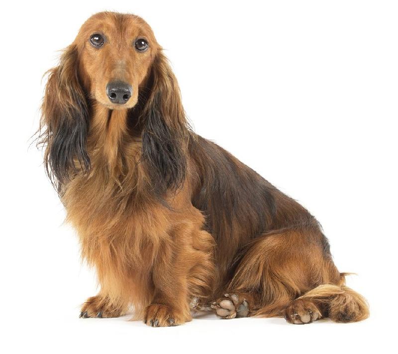 Enlever poil de chien voiture maison design - Enlever poil de chien voiture ...