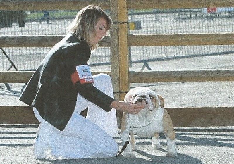 Les Bulldog Anglais de l'affixe breeder's cup