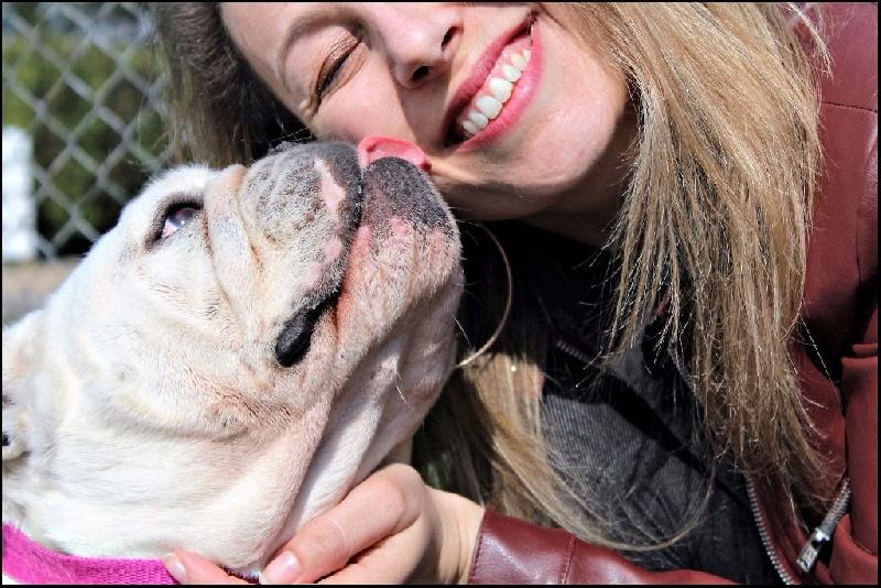Les Bulldog Anglais de l'affixe Des Joyeux P'tits Molosses