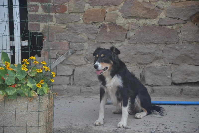 Les Border Collie de l'affixe Des Sources De La Liane