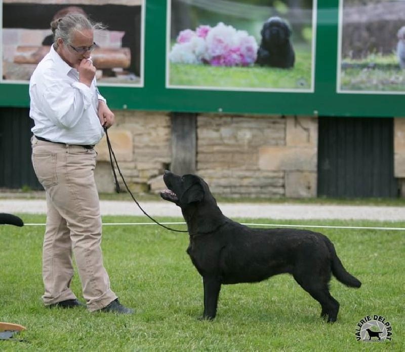 Les Labrador Retriever de l'affixe Of Bowmore Legend