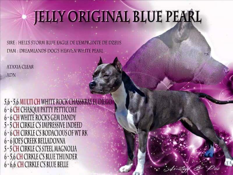 Jelly original blue pearl (Sans Affixe)