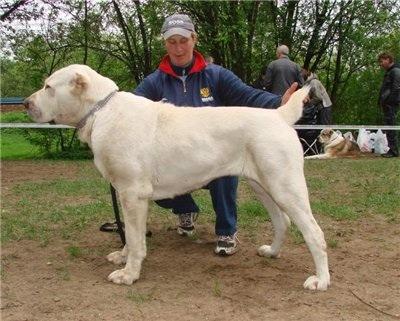 Le Standard de la race Berger d'Asie Centrale sur Atara.com