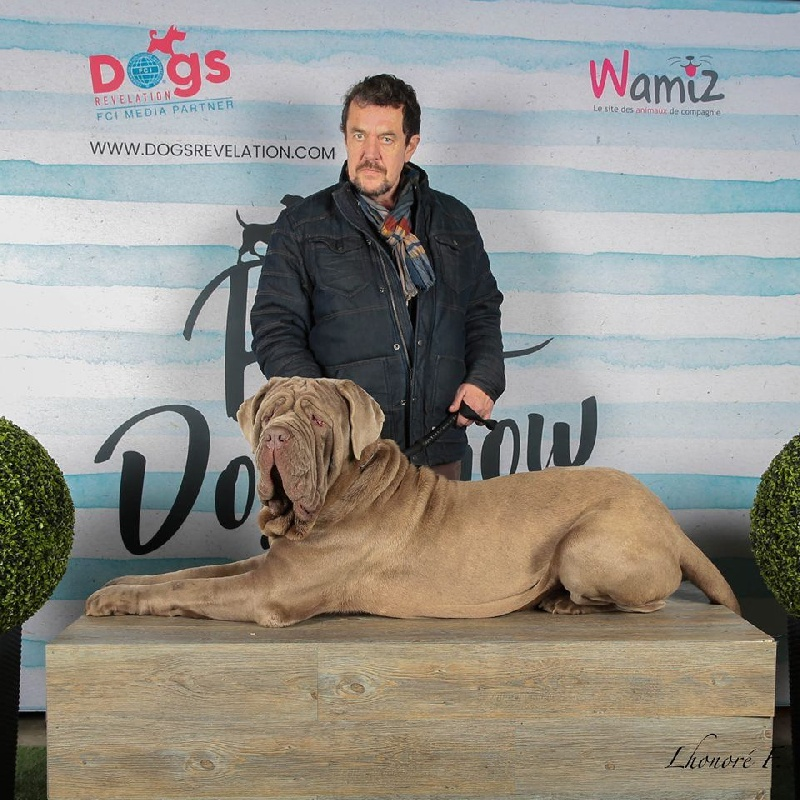 Publication : des Mastiffs d'Enfer  Auteur : dogs.revelations