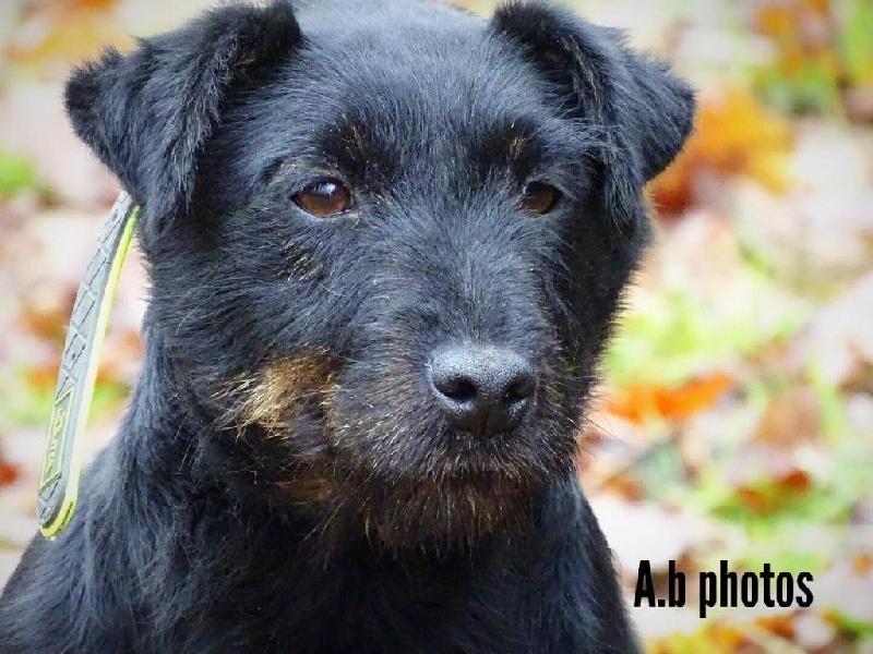 Les Terrier de chasse allemand de l'affixe Du Champ De Loup