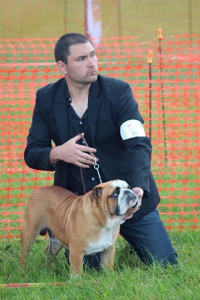 Les Bulldog Anglais de l'affixe Rock Island