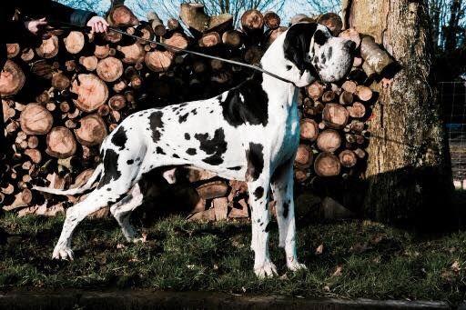 Publication : Des Terres De Beaulieu  Auteur : Ertel Margot