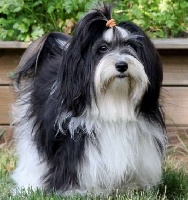 elmada dogs Winny