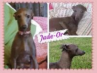 Jade-or (Sans Affixe)