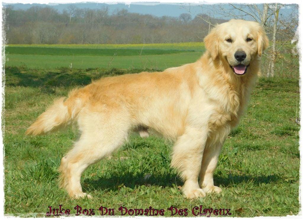 Chien - Elevage Du Mas De La Hillane - eleveur de chiens