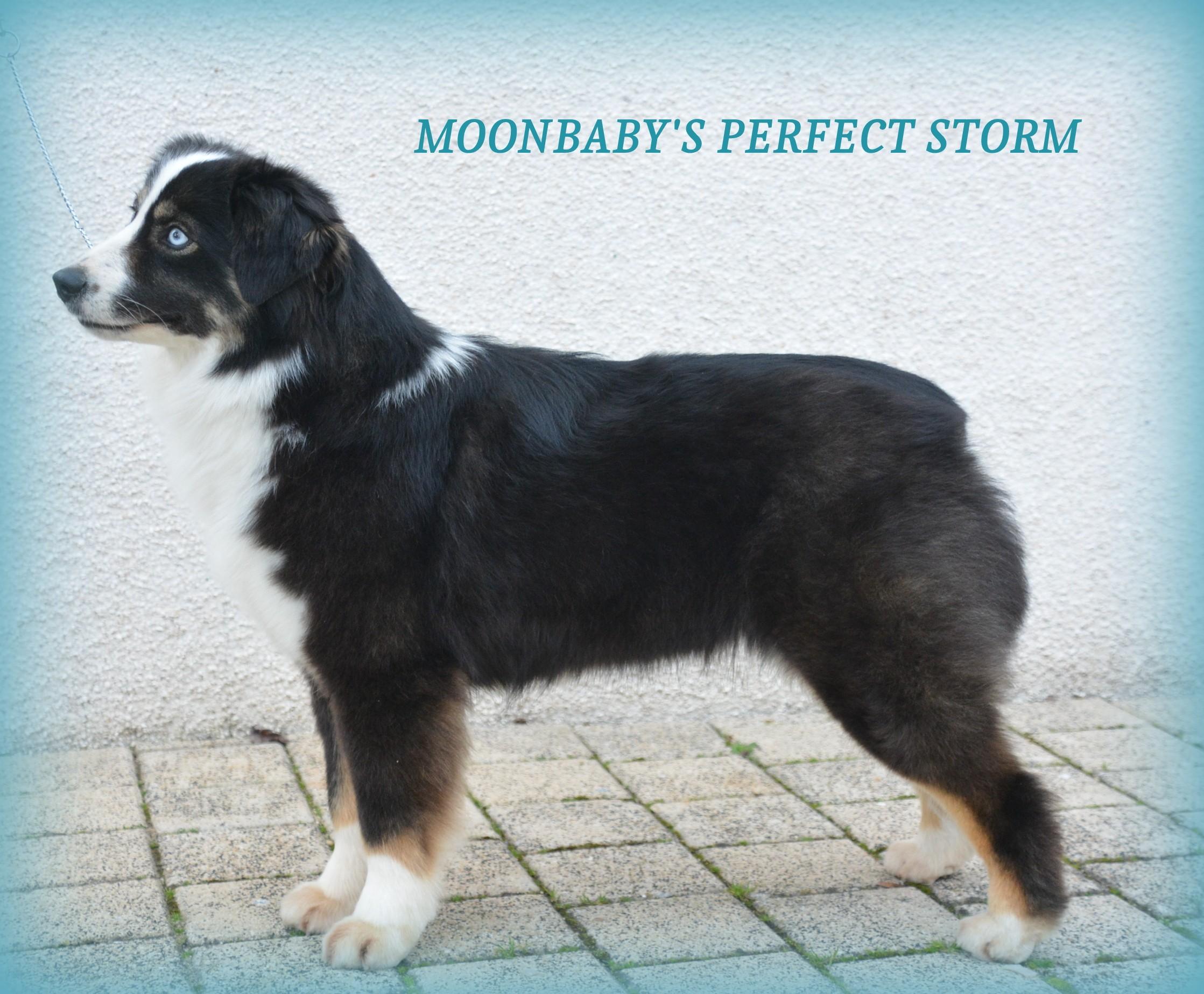 moonbaby's Perfect storm
